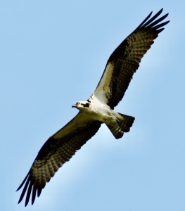 PHOTOS FROM BEGINNING BIRDER FIELD TRIP 03.13.21