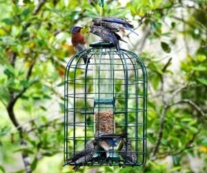 TOM STANMORE'S BLUEBIRDS